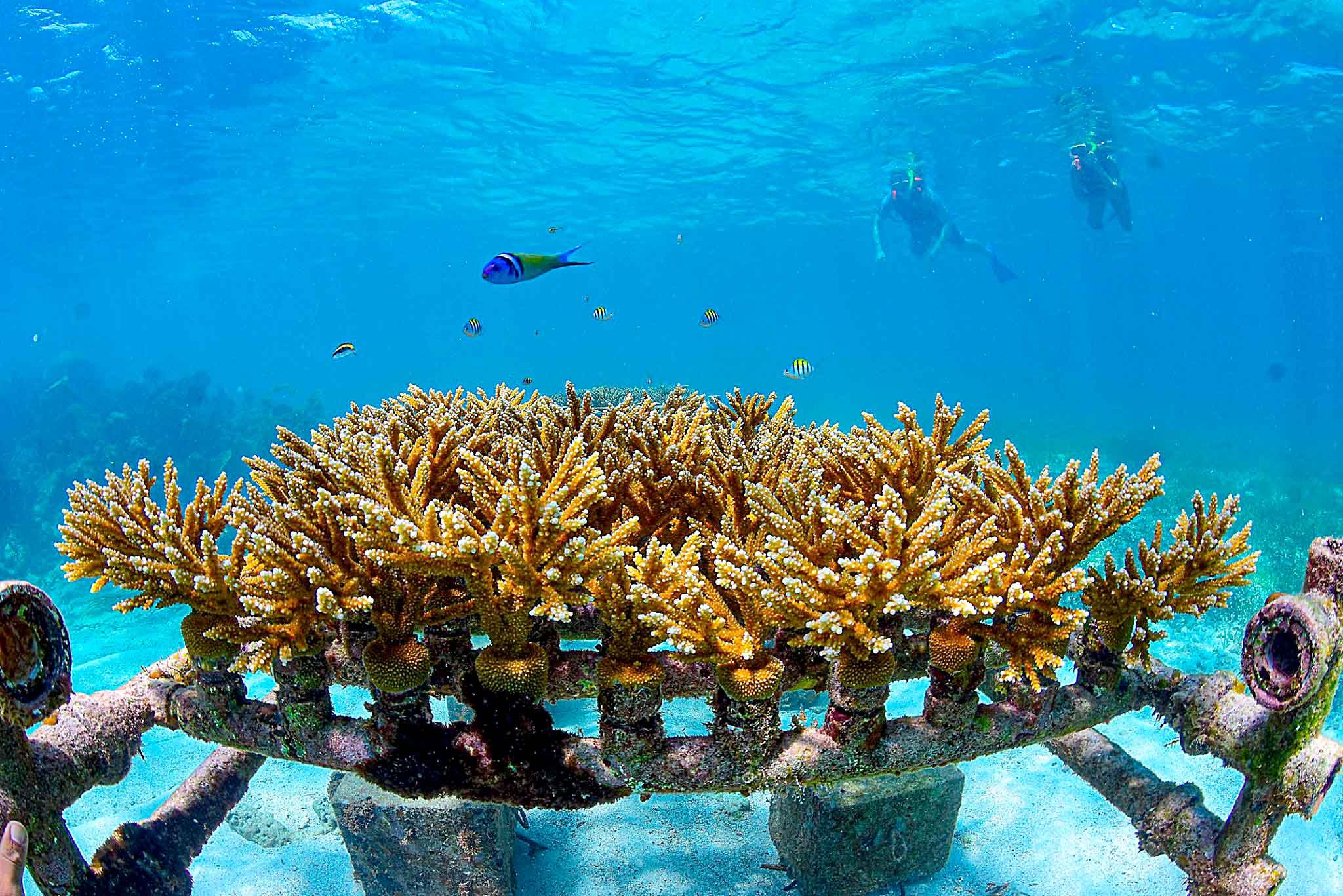 Viajeros Inspirando Viajeros Arrecife