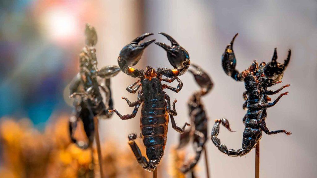 8 insectos que no sabías que puedes comer