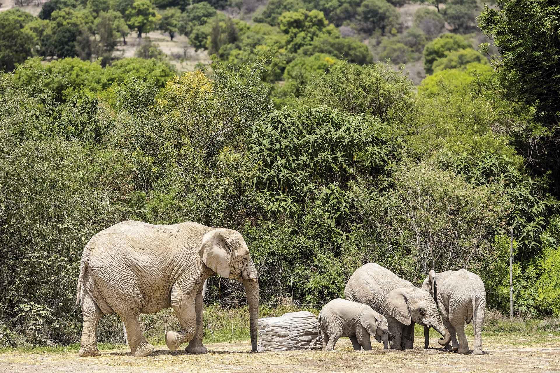 Puebla Africam Safari
