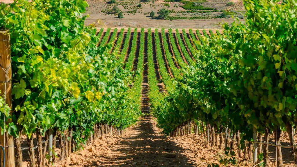 The Best of Ribera del Duero: los 20 vinos elegidos por los expertos