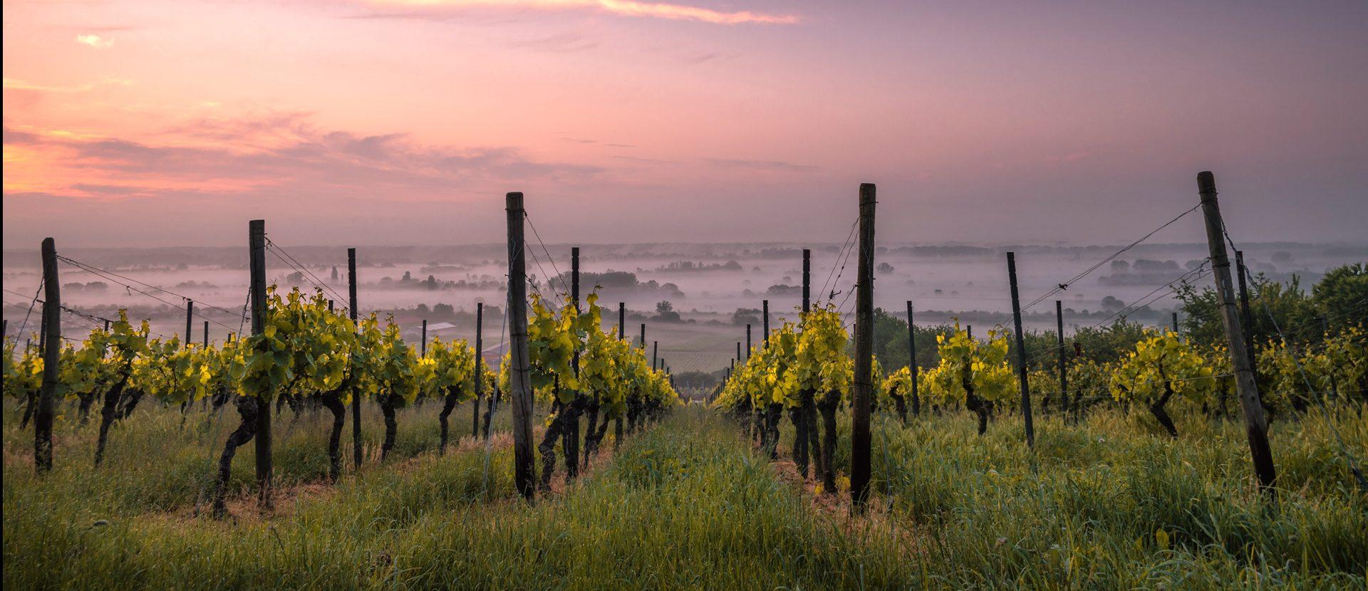 Conoce la nueva Ruta del Vino Aguascalientes