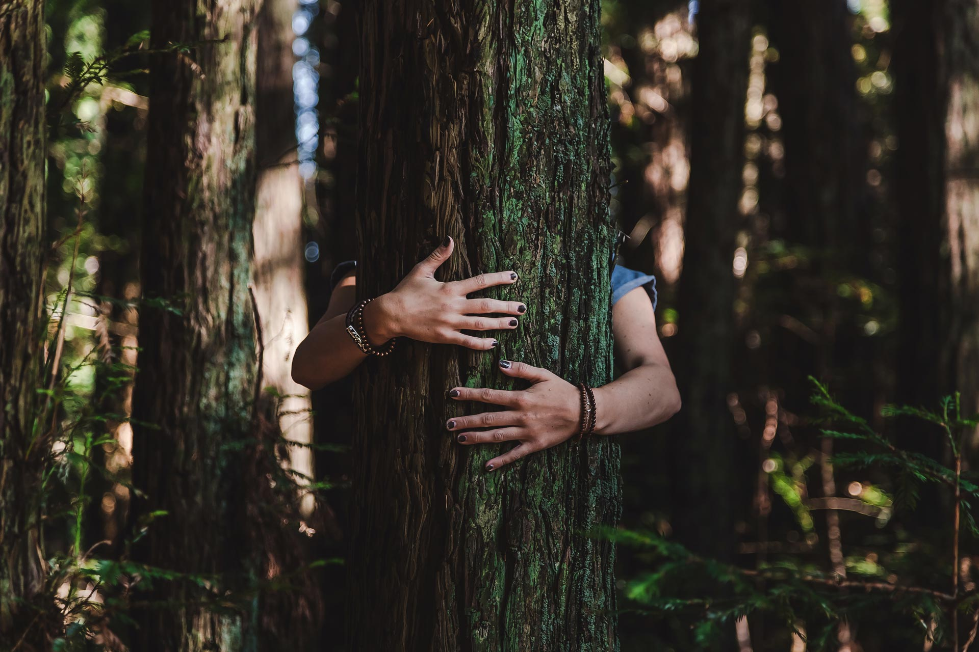 Abrazando un árbol en el bosque