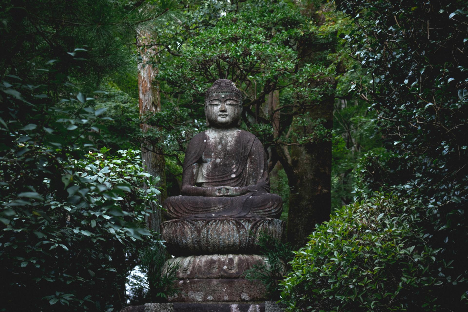 Buda en bosque de Japón