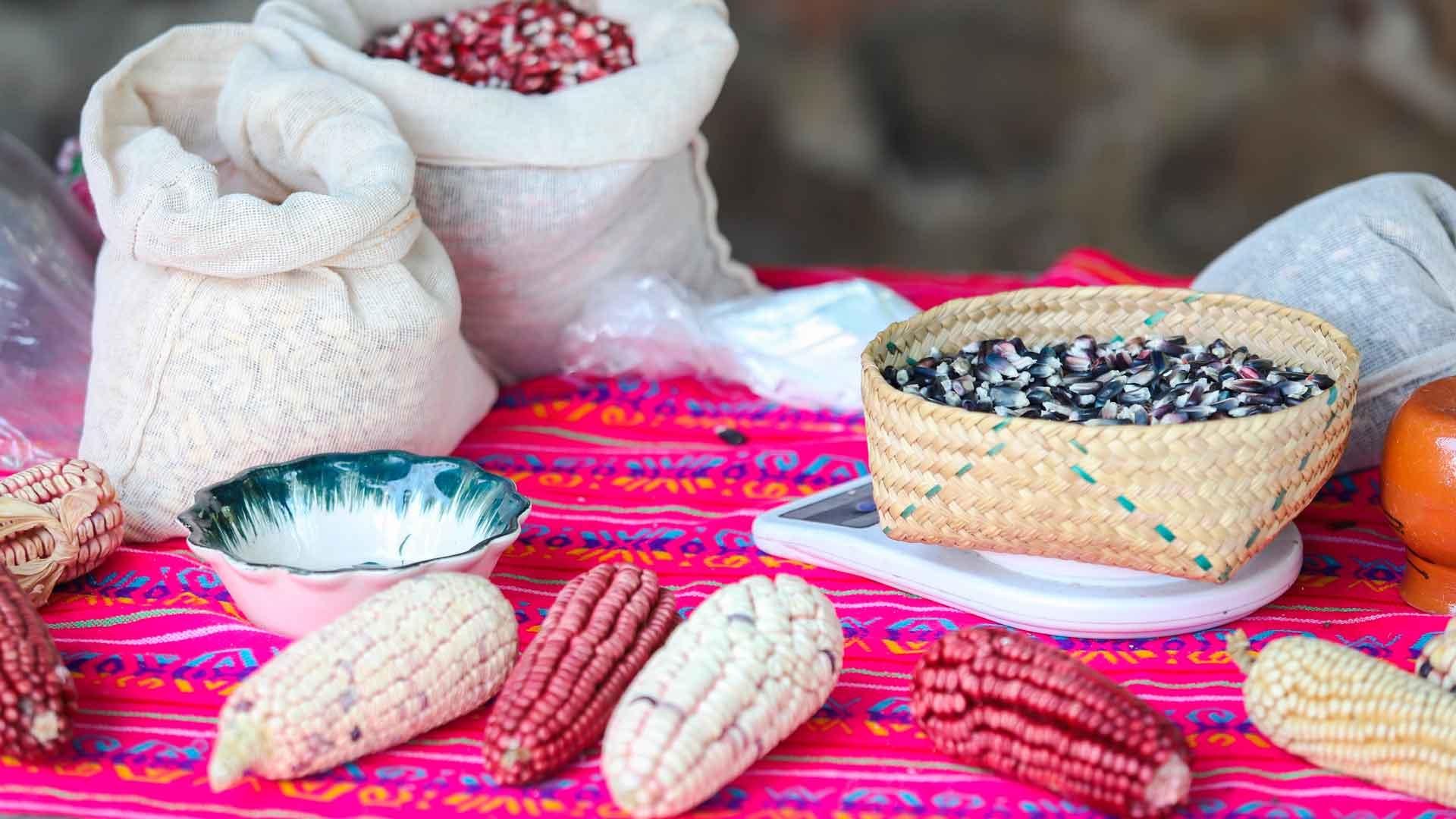 Los productores detrás del maíz y mole de Milpa Alta