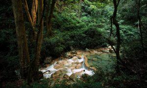Sierra Gorda queretana: viaja al corazón verde de México