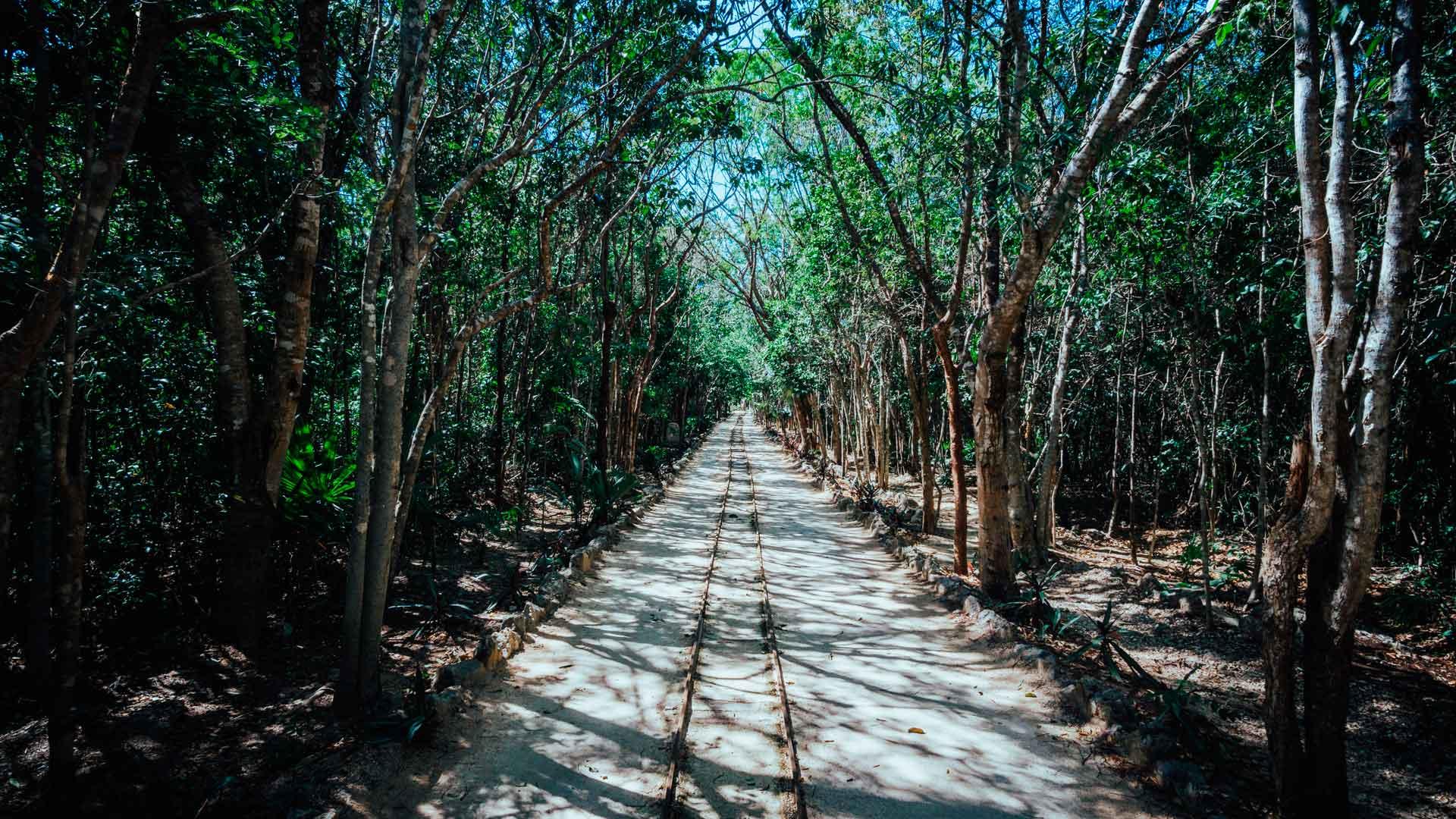 Tren Maya promete proteger medio ambiente