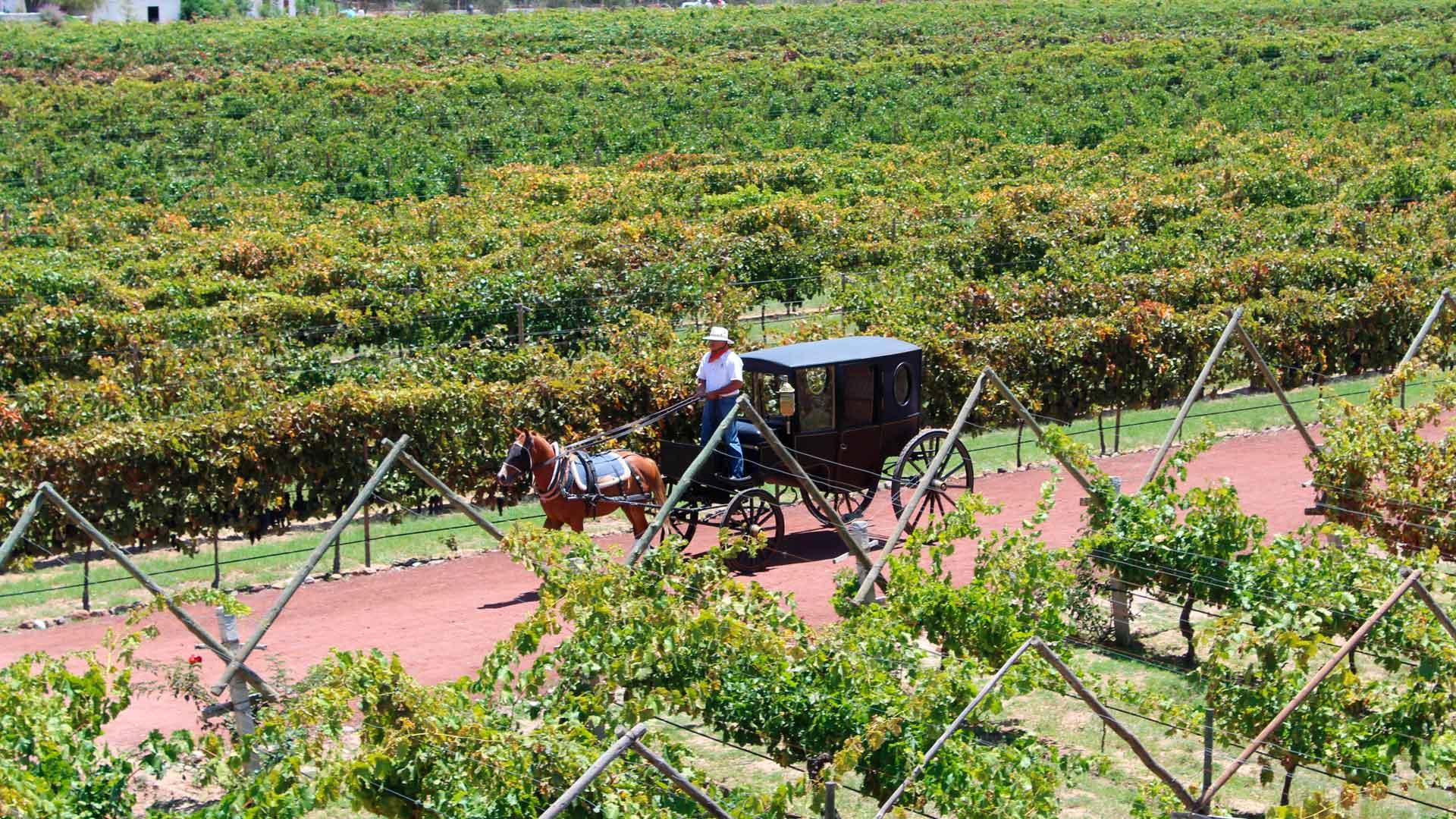 VINUM Guanajuato 2020: maridaje entre vino y tecnología