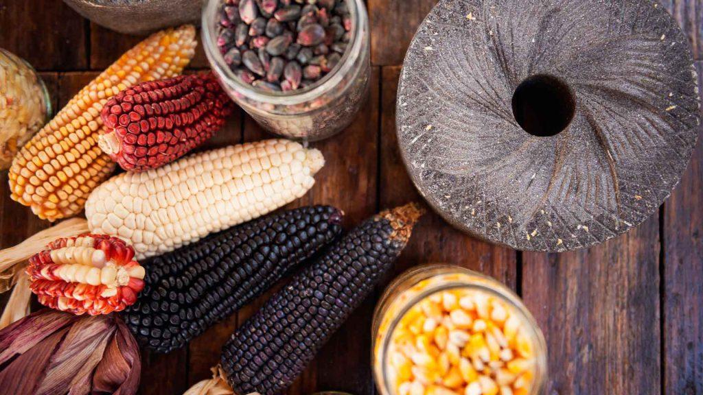 8 frases de cocineras tradicionales acerca del maíz y la milpa