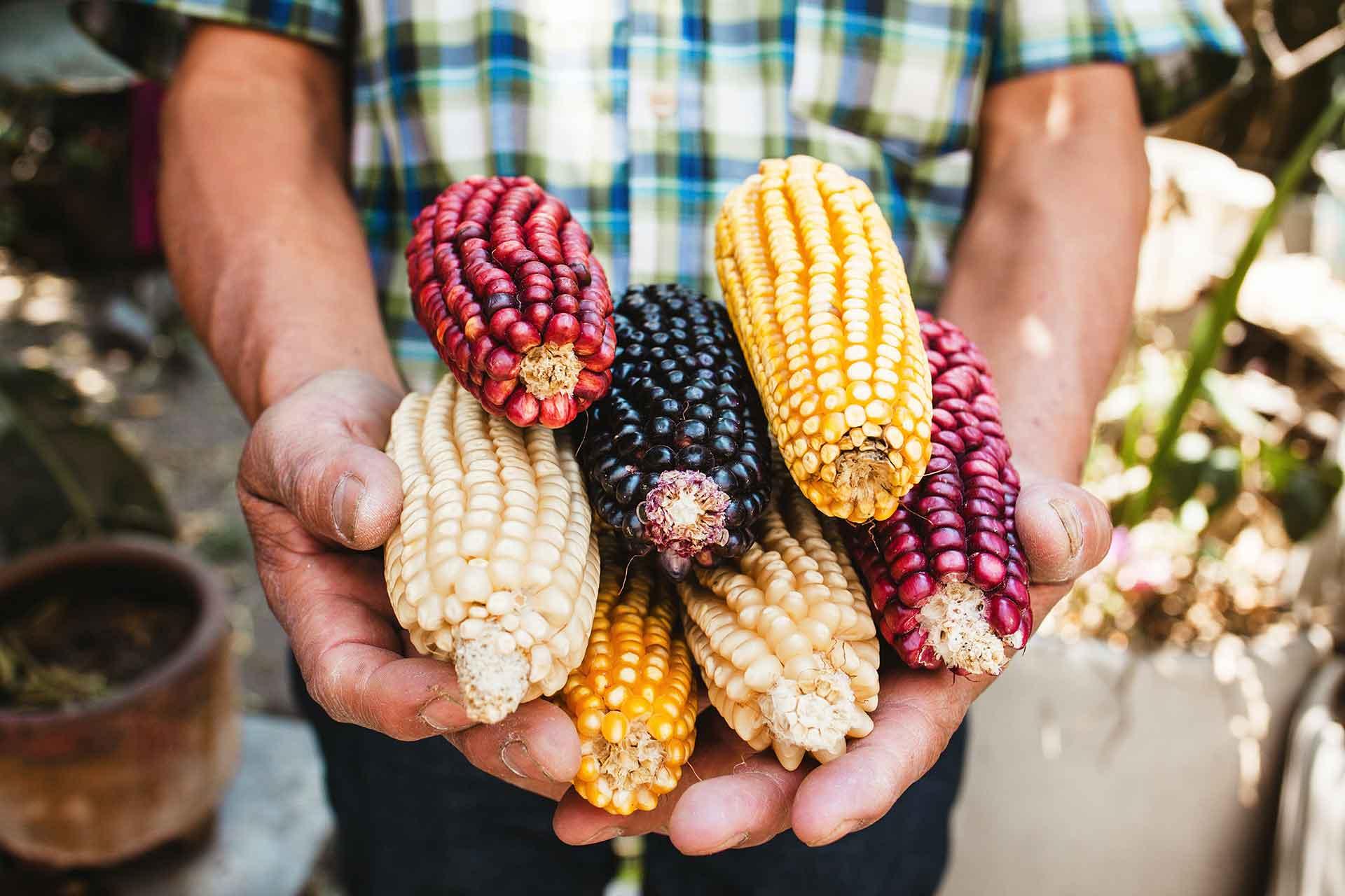 Gastronomia mexicana-maiz