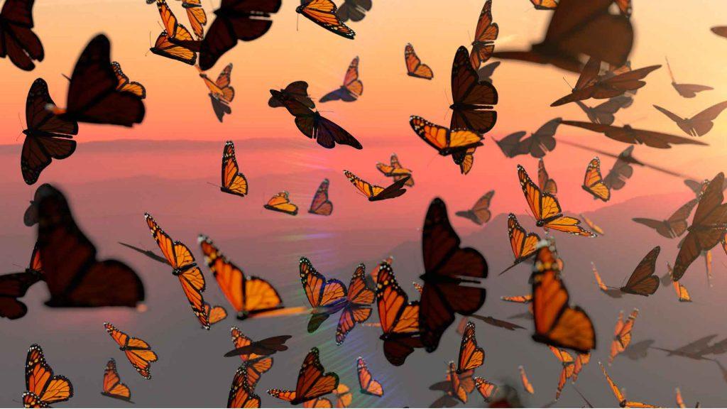 Prepárate para la temporada de Mariposa Monarca