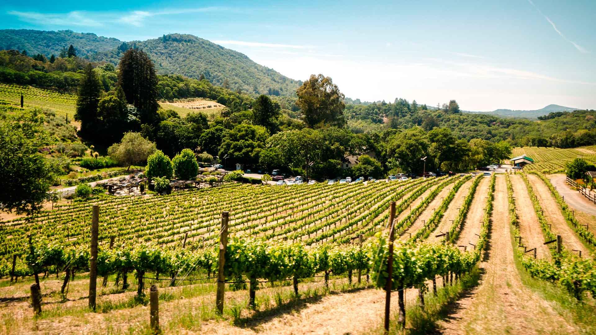 Descubre los vinos de la región del Maule en Chile
