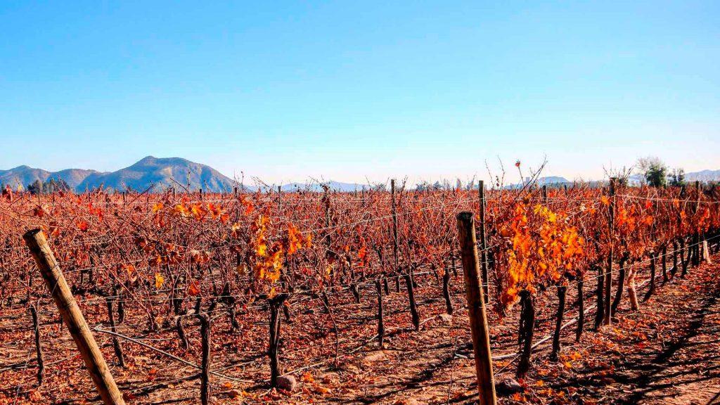 Marques de Casa Concha: 40 años de tradición vinícola
