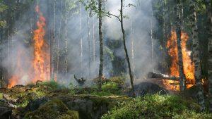 La Tierra nos advierte: desastres naturales de 2020