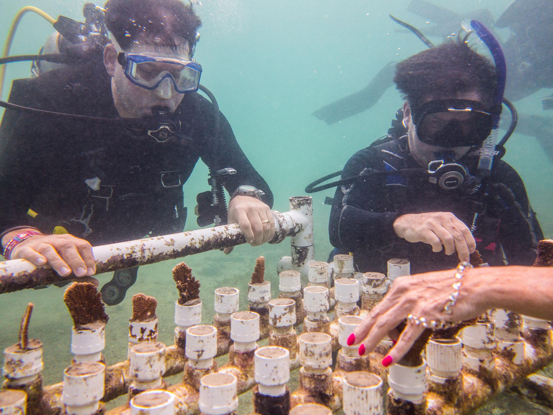 Buceo con corales
