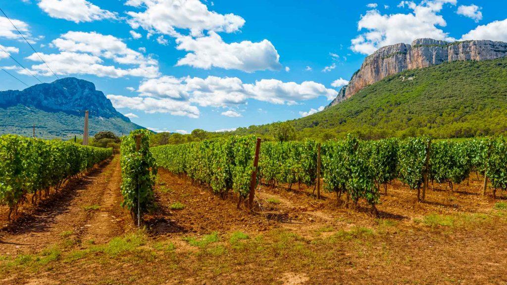 Viajeros Inspirando Viajeros: del mundo del vino a la gastronomía en BC