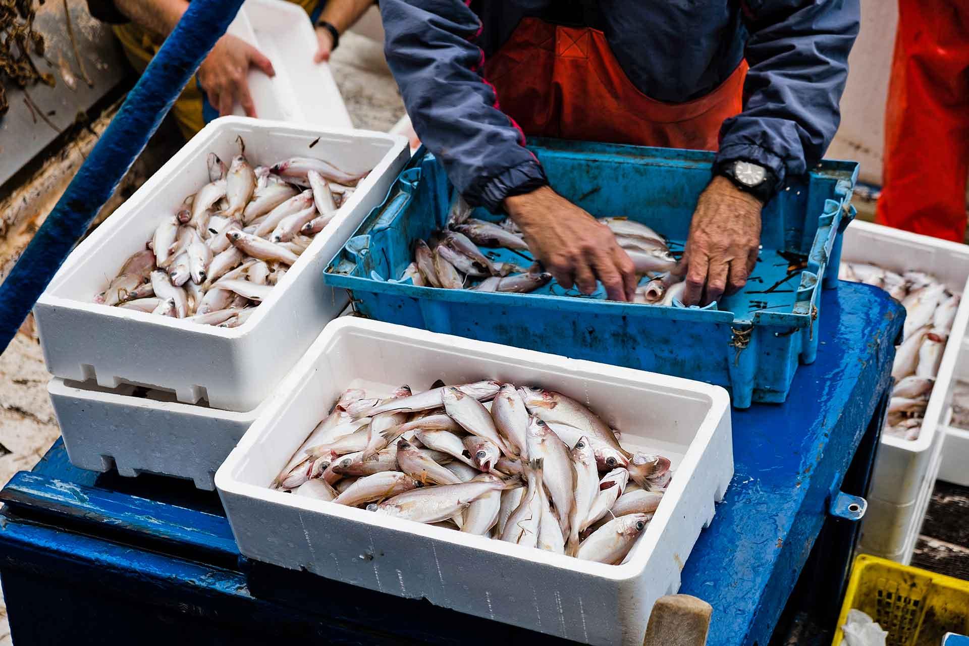 Alimenta tu corazón pescadores
