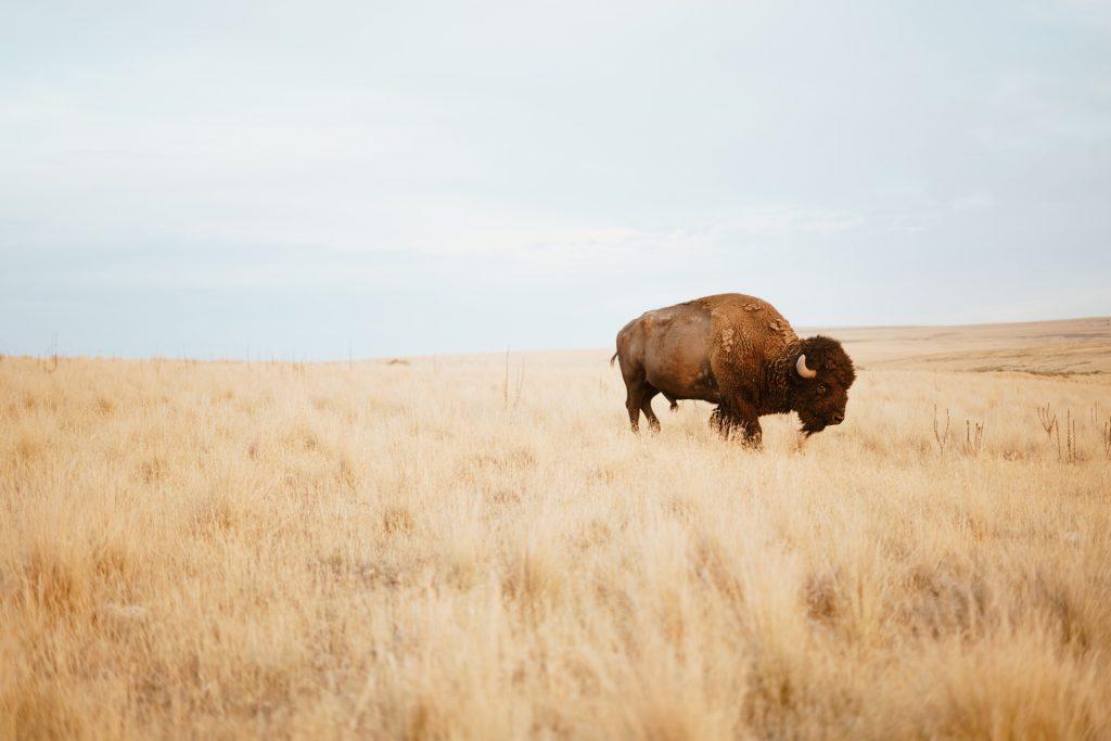 Animales salvajes que han vuelto a su hábitat
