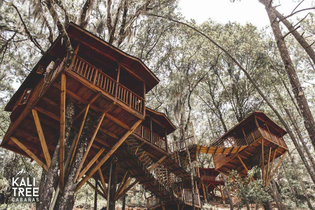 Casas del árbol