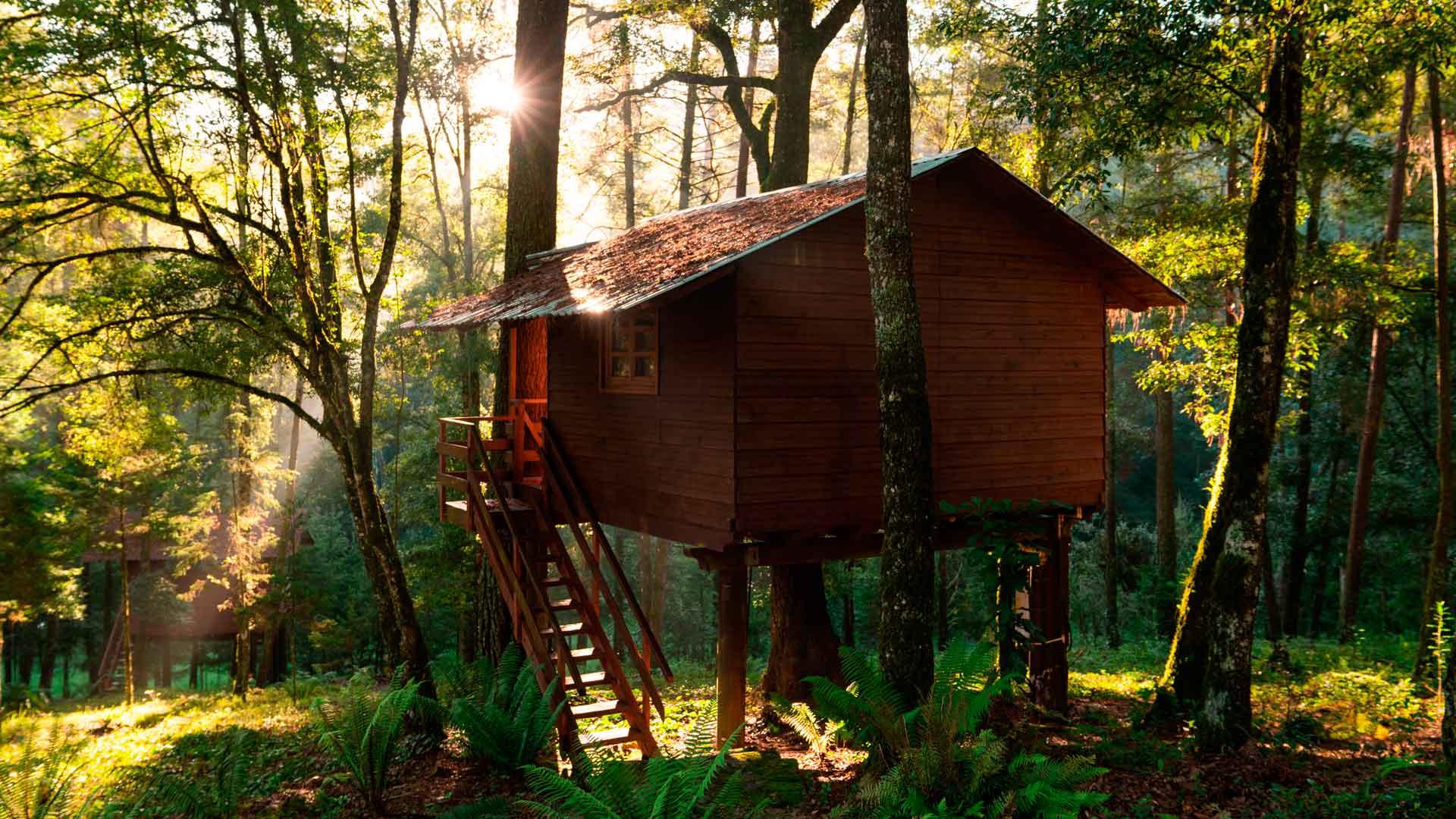Casas del árbol en México: 5 divertidos hospedajes para ir con niños