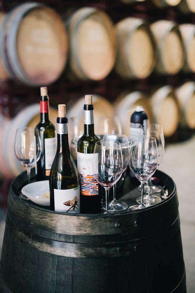 Guanajuato vinos