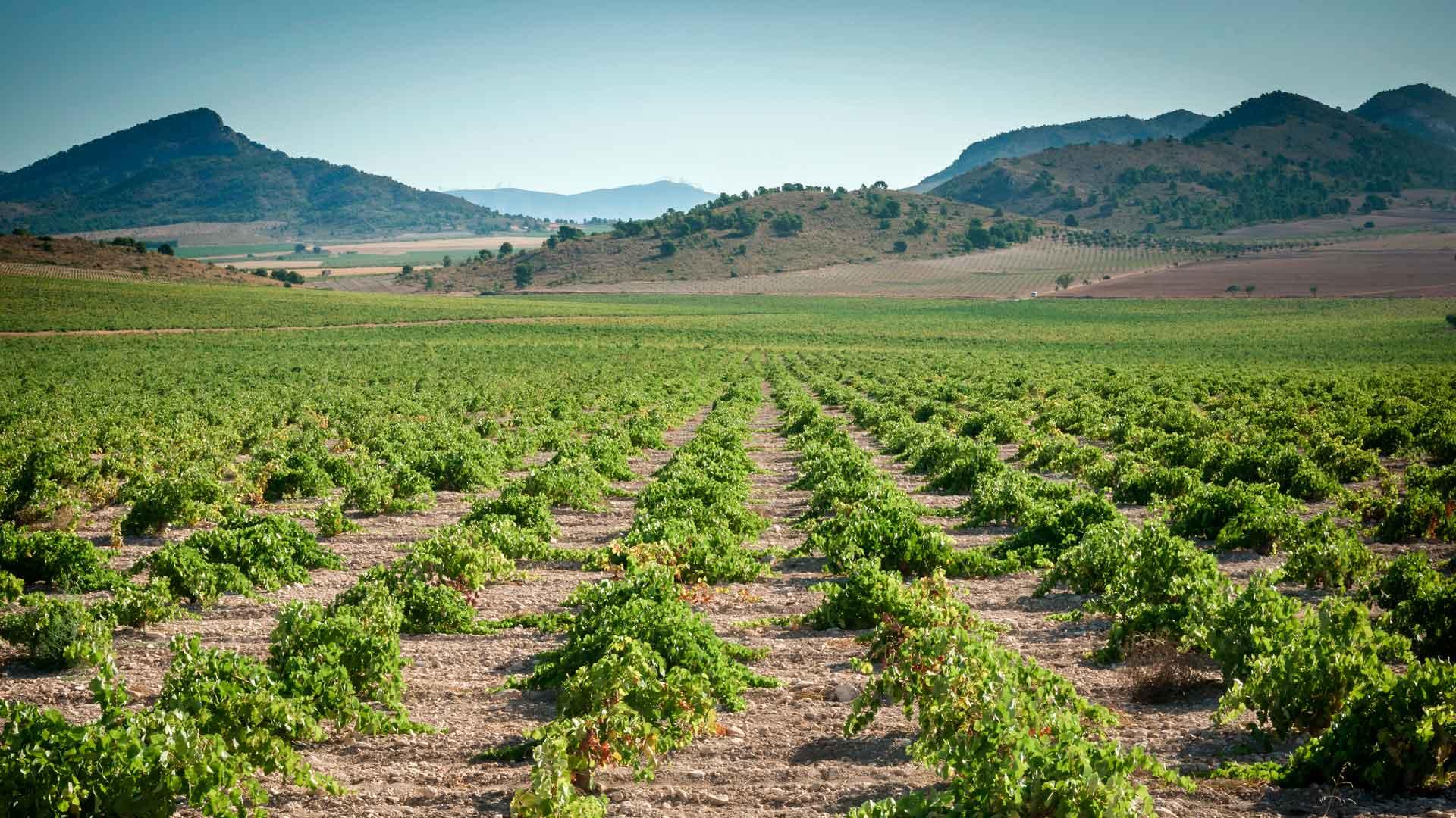 DOP Jumilla: vinos de tradición española