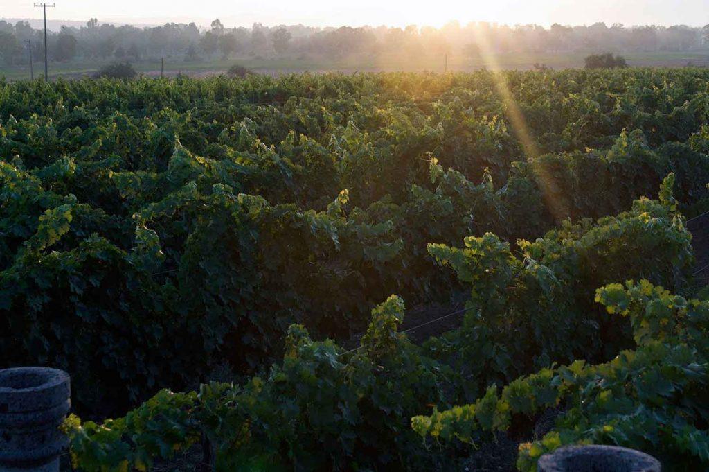 Ruta del vino San Miguel de Allende