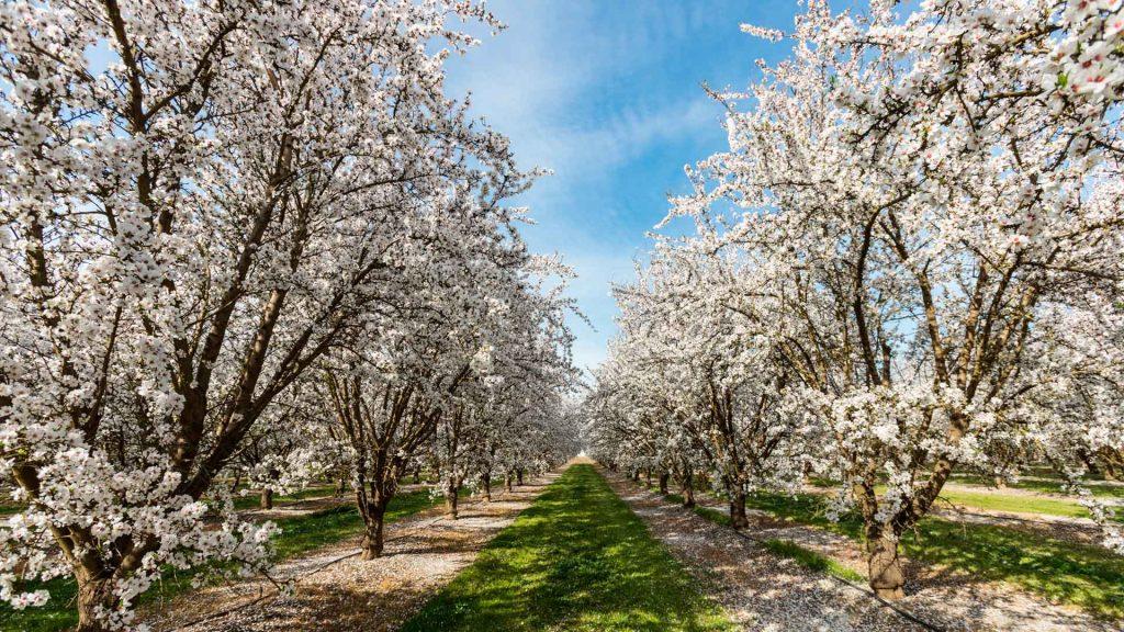 10 destinos para ver florecer árboles y plantas
