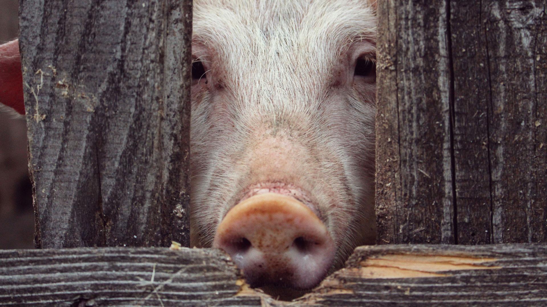 Ganadería industrial, enemiga del planeta: un reportaje de Igualdad Animal