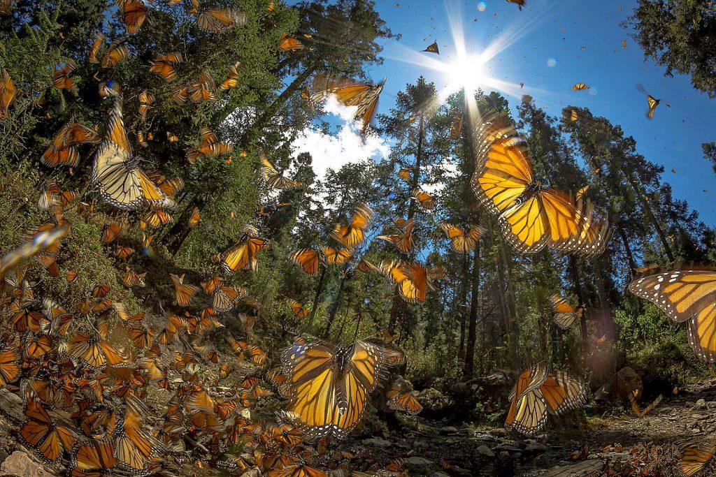 Reservas de la Biósfera mariposa Monarca