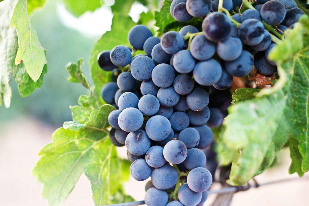 Wines Argentina