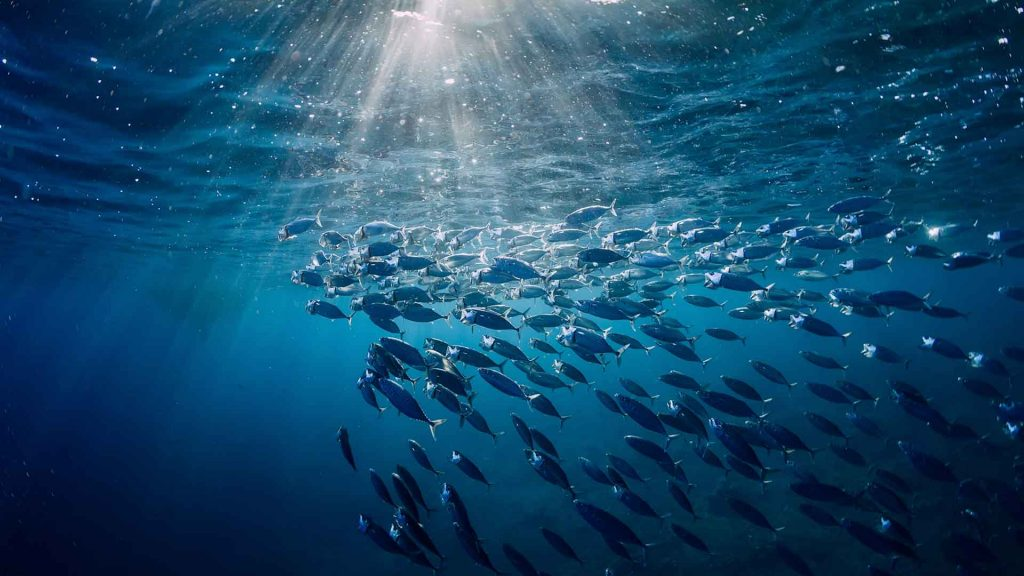 6 datos que no sabías sobre el atún