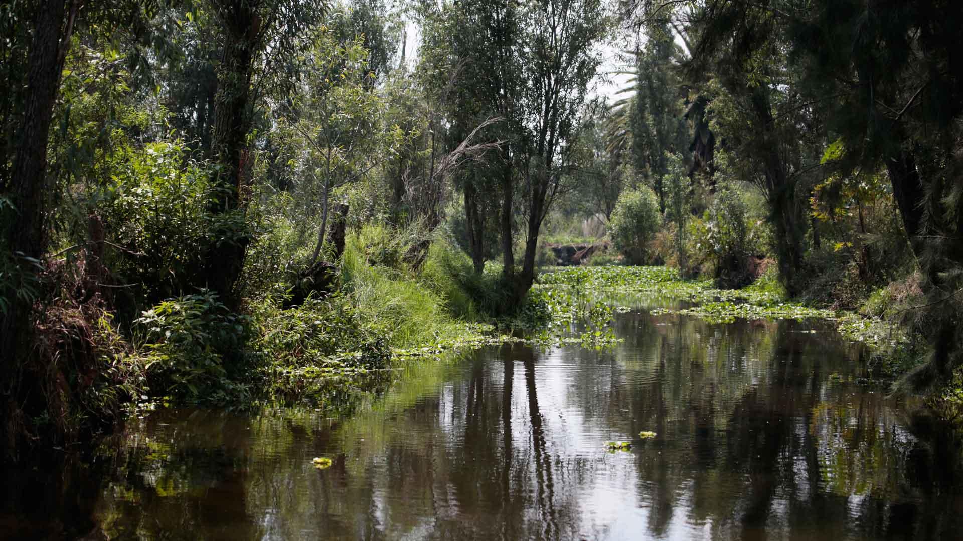 Chinampa Nantli: relajación y sustentabilidad en Xochimilco
