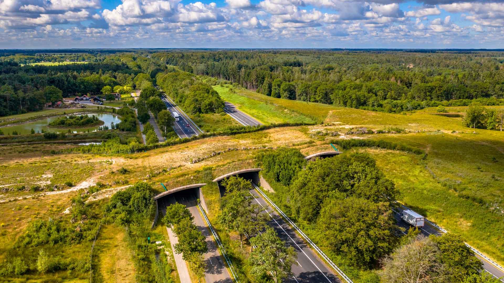 Ecoductos: caminos seguros para animales