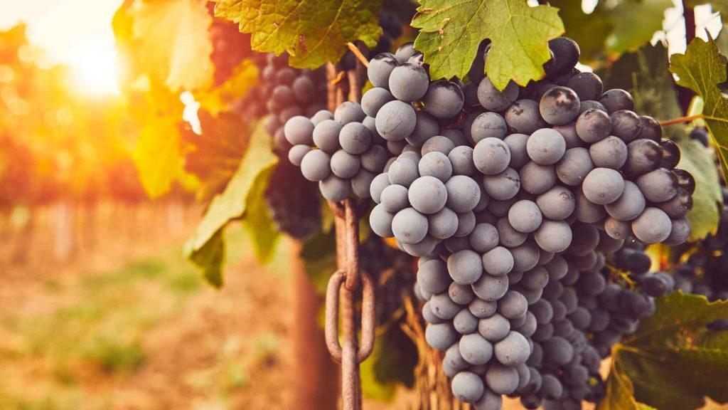 Bodegas Domecq, creadoras del primer vino de vasija en México