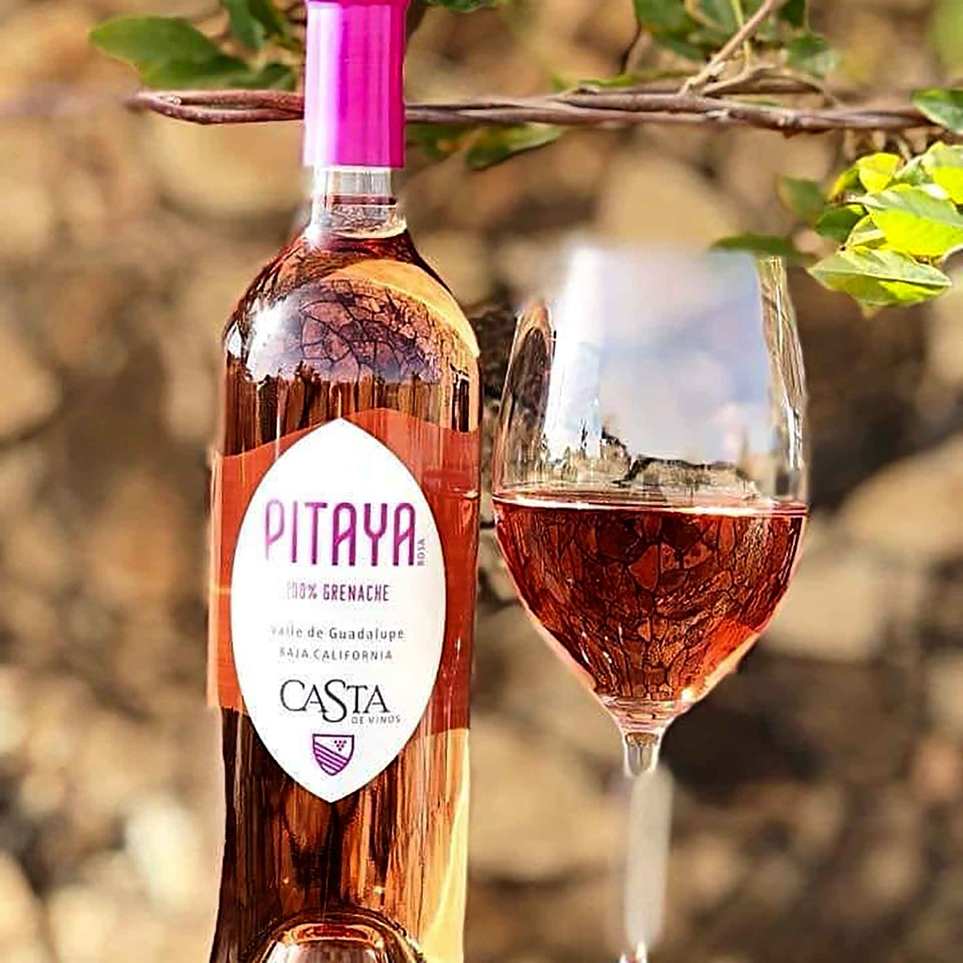 Vinos mexicanos, Pitaya
