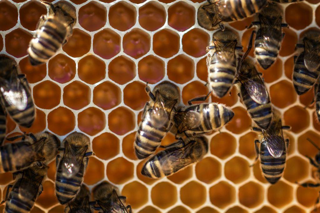 Día Mundial de las Abejas: ¿qué está pasando con este vital insecto?