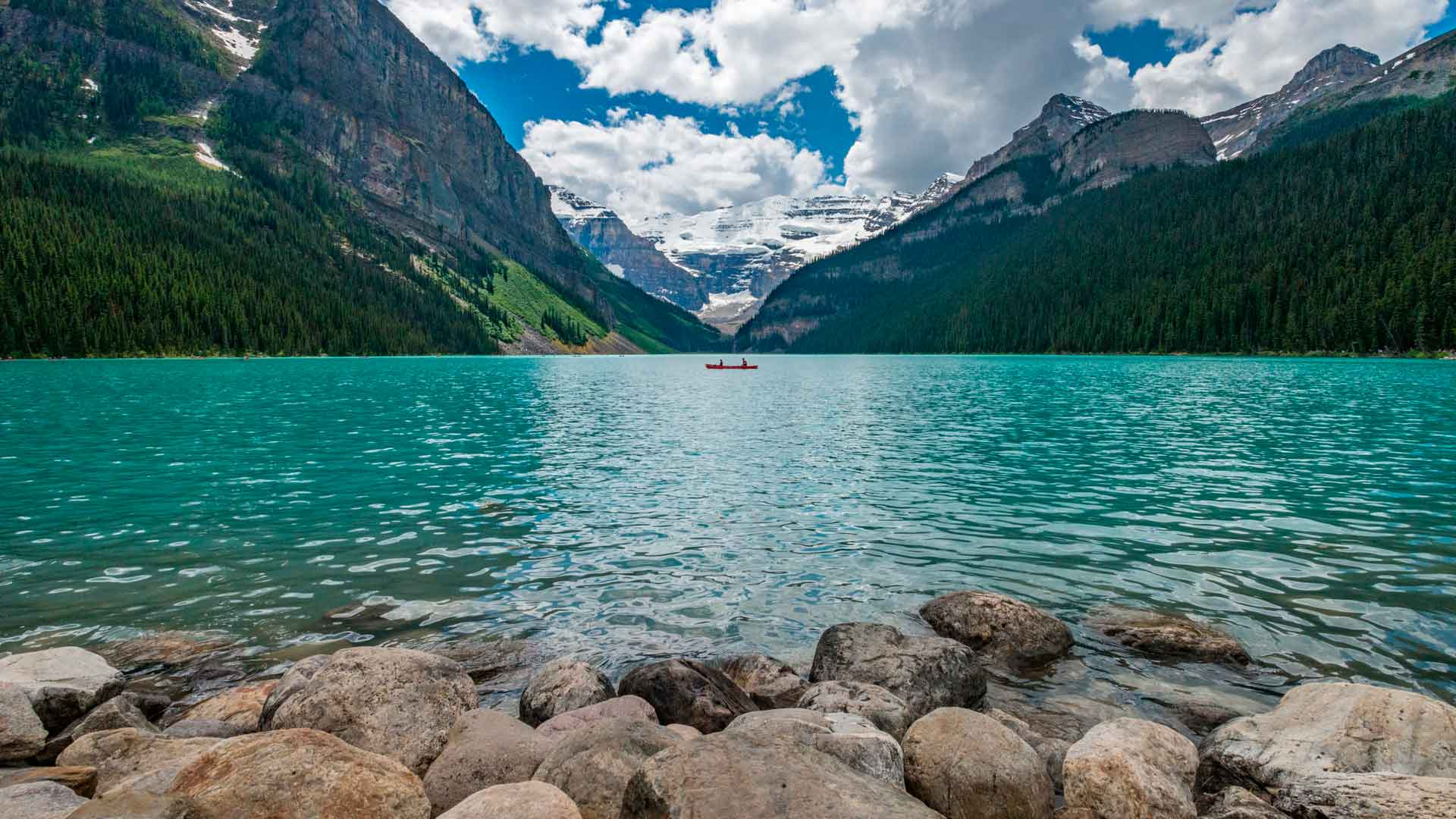 Canadá salvaje: un recorrido por su fauna