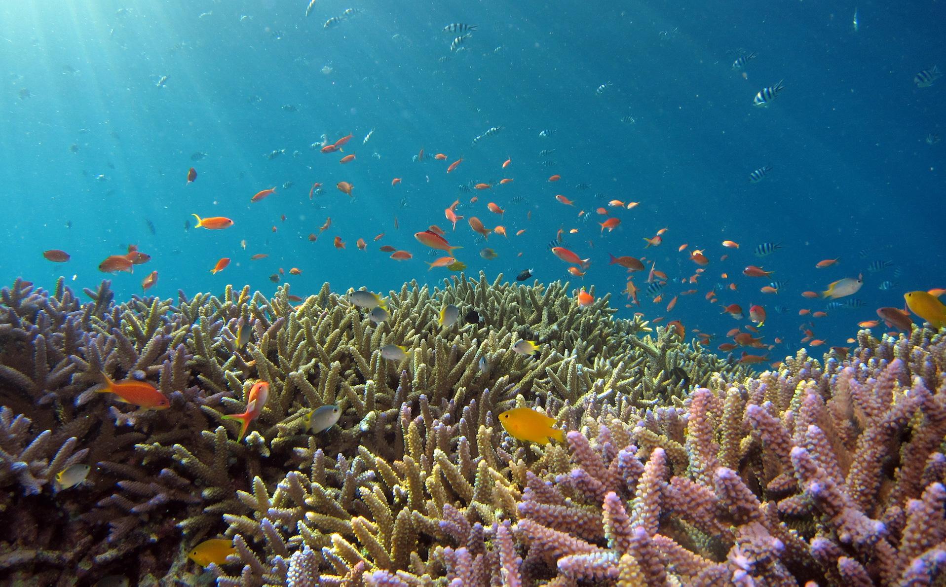 Día Mundial del Medio Ambiente: así puedes sembrar corales