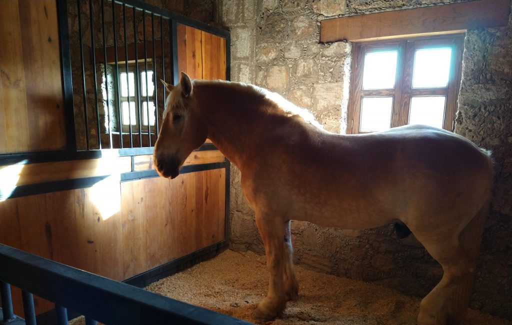 GastroFest en Hacienda Tovares: vino, queso y hermosos caballos