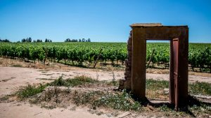 Conoce los vinos orgánicos de Chile que Viñedos Veramonte tiene para ti