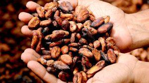 10 curiosidades del cacao que debes saber