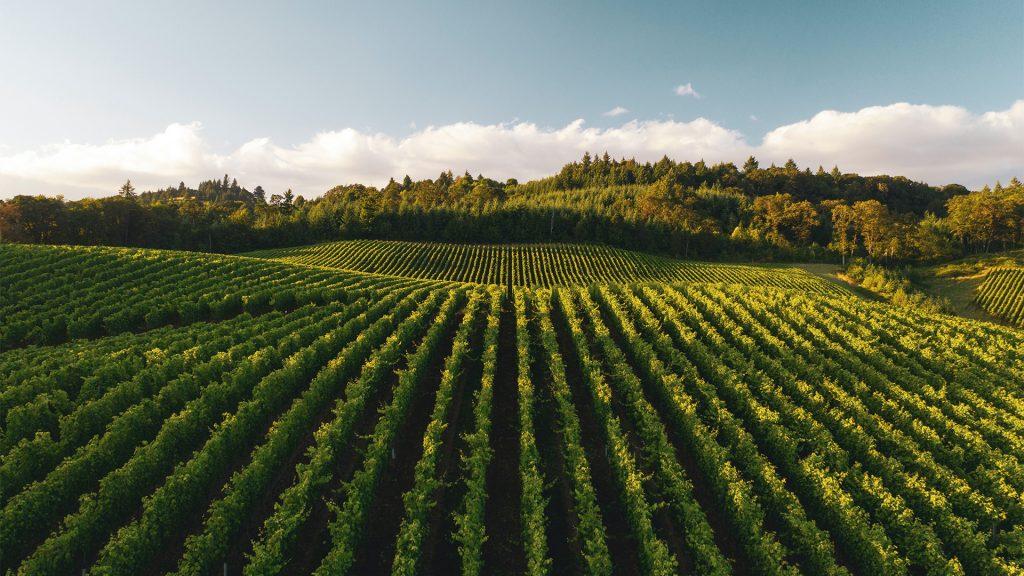 4 vinos de Oregon y Washington que debes probar