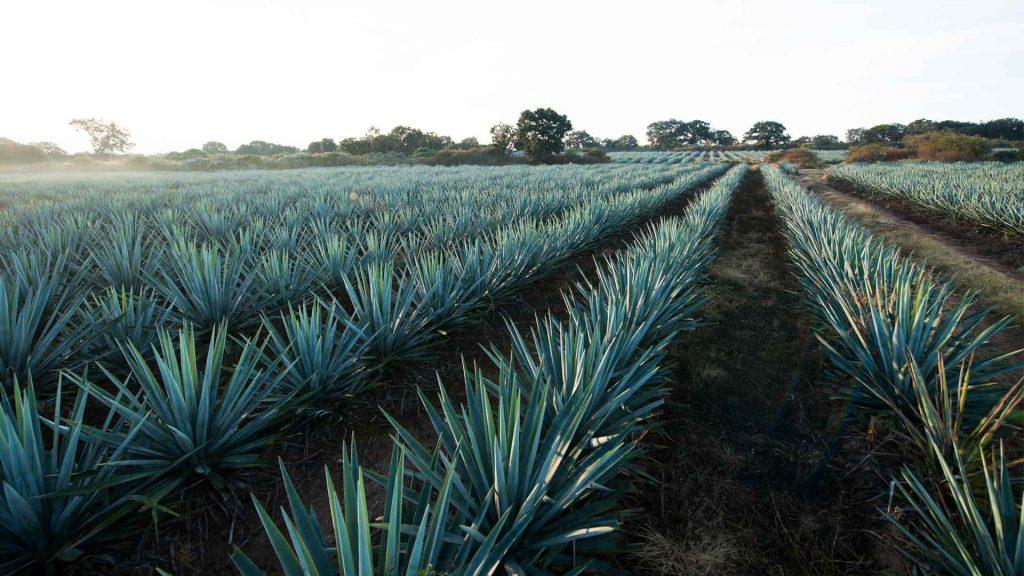 Casa San Matías: 135 años de hacer tequila con el corazón