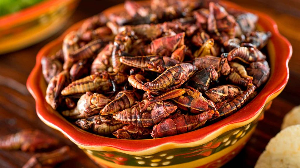 ChapiMX: deliciosa carne de chapulín a tu alcance